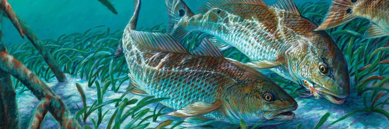 Redfish Runhome