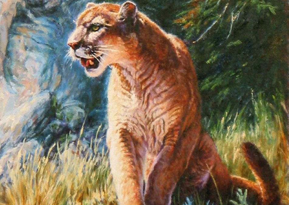 Blue Canyon Cougar