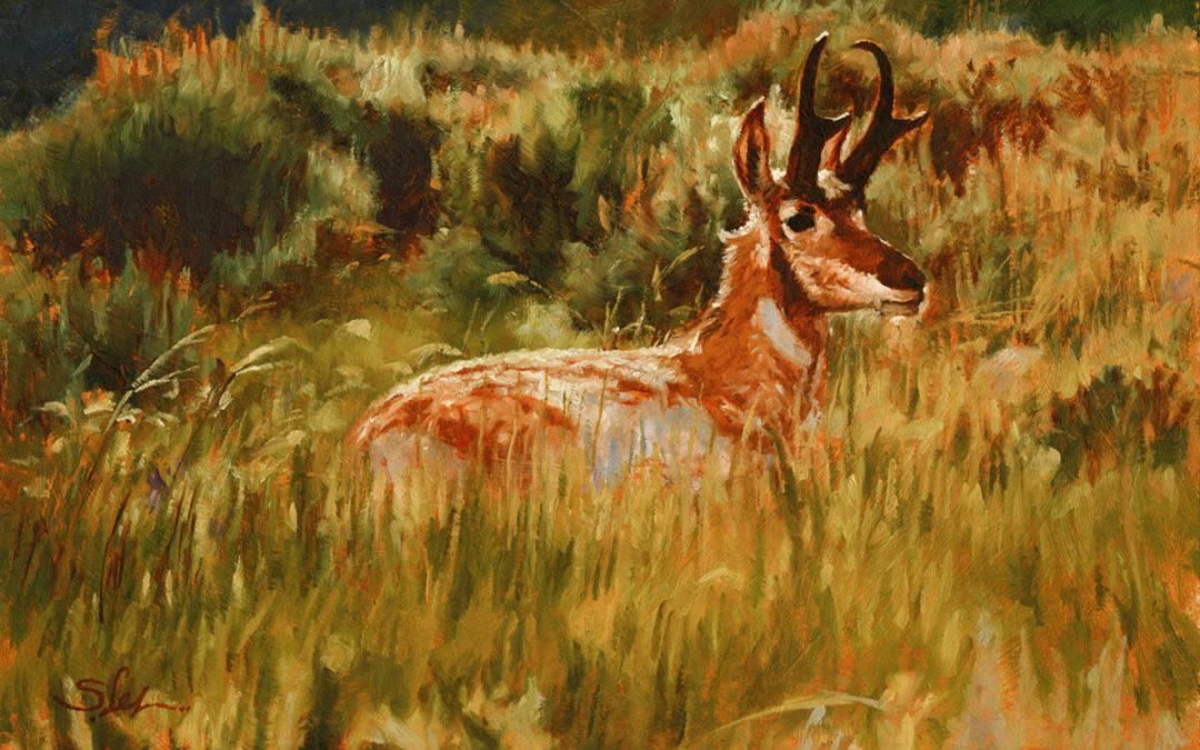 Antelope Summer