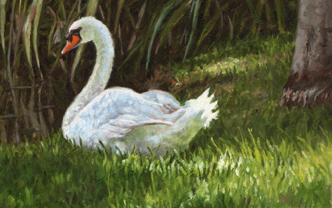 Dapple Light Swan