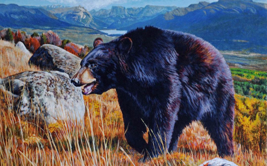 Green River Black Bear