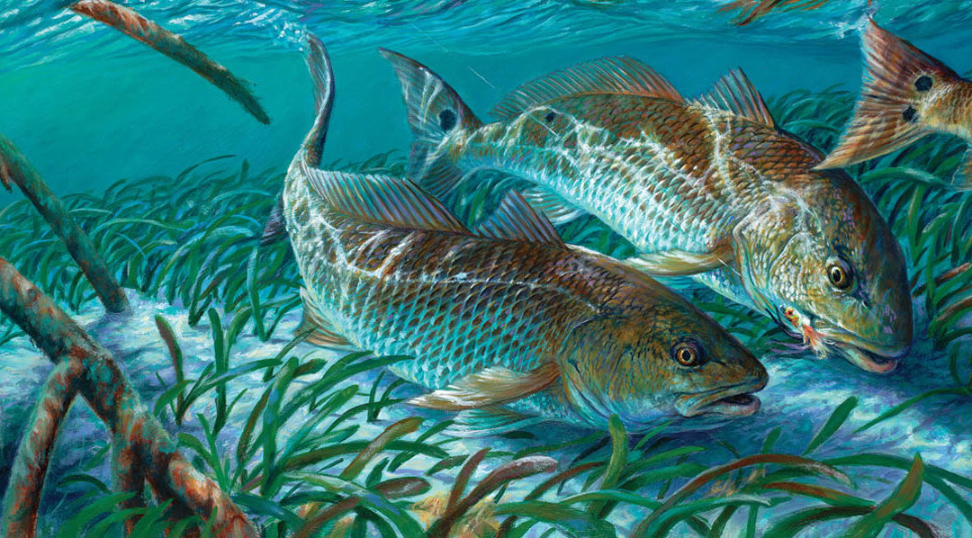 Redfish Run